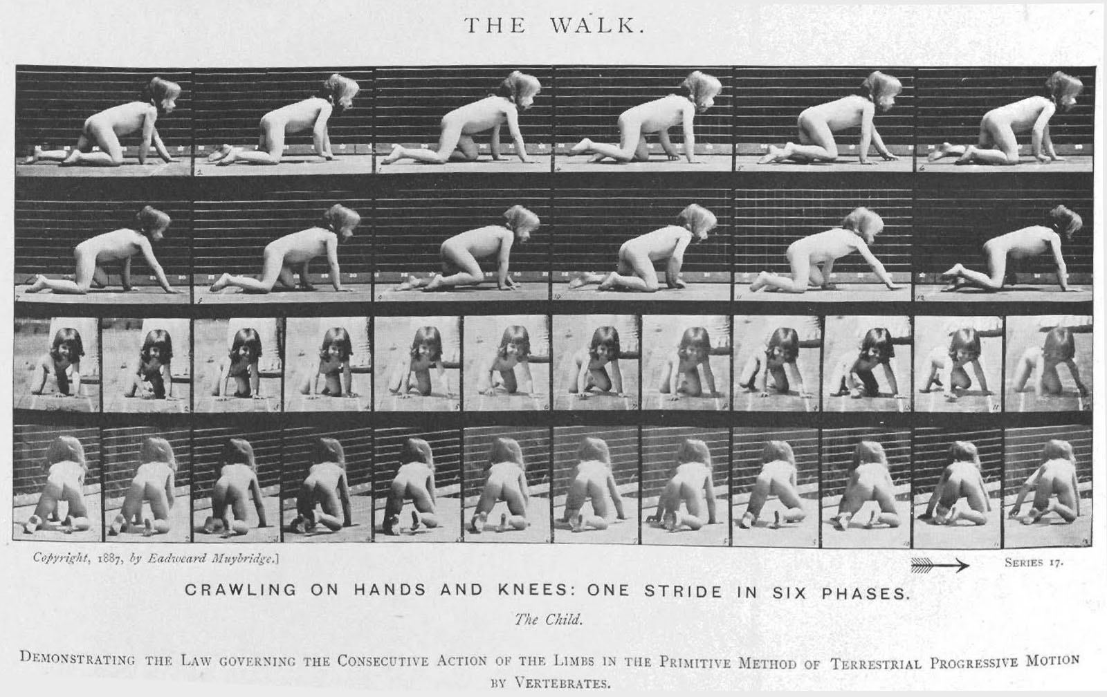 4 Muybridge human motion_1